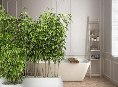Jakie kwiaty do łazienki wybrać? 8 najlepszych roślin cieniolubnych.
